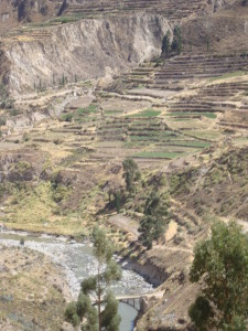 Colca Canyon, terracing and the Rio Colca